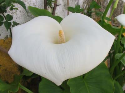 primaryPic_flower1 (reduced).jpg